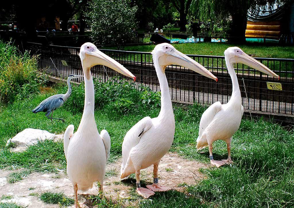 Le Zoo de Londres