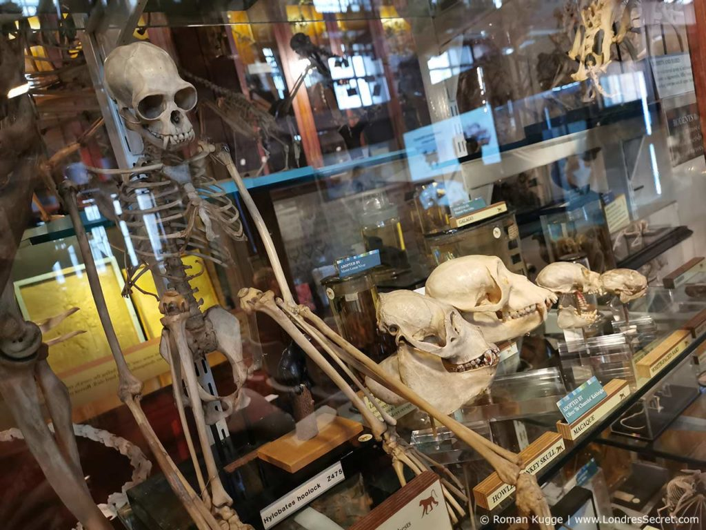 Grant Museum of Zoology Londres