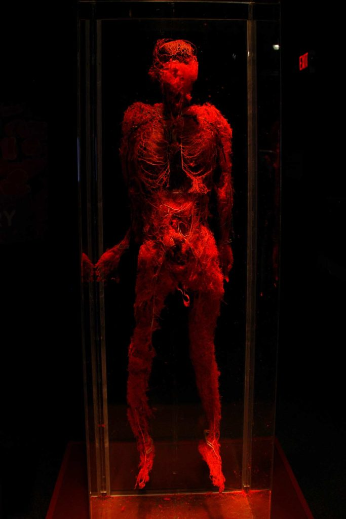 Exposition Body Worlds Londres